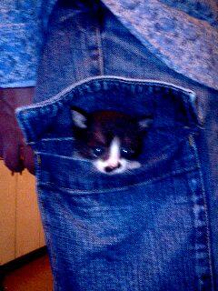 ポケットのなかには「くり」
