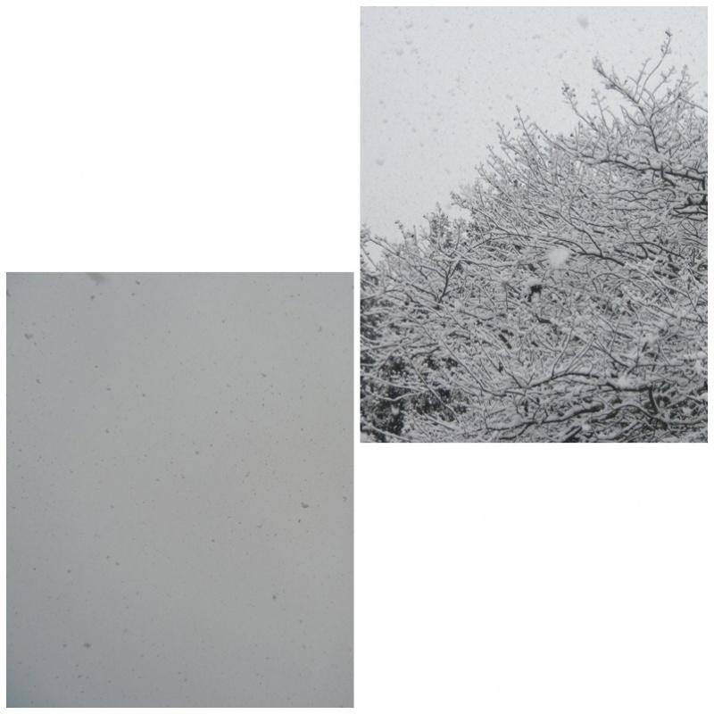 降ってくる雪を撮ってみた。