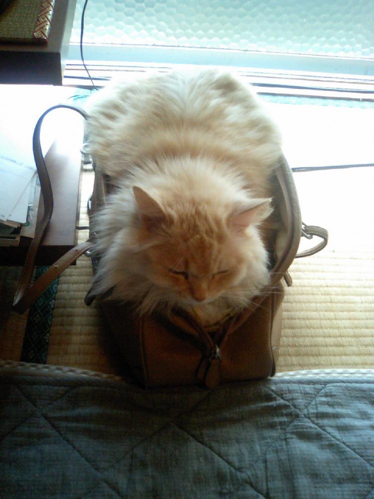 かばんに潜り込む猫