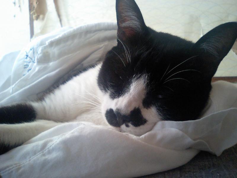 服に潜り込む猫
