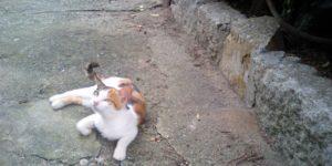 伸びやかに島で暮らす猫たち