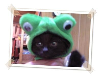 僕、ちゅら。 カエルじゃないよ