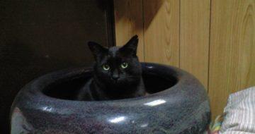 壺猫、ろく