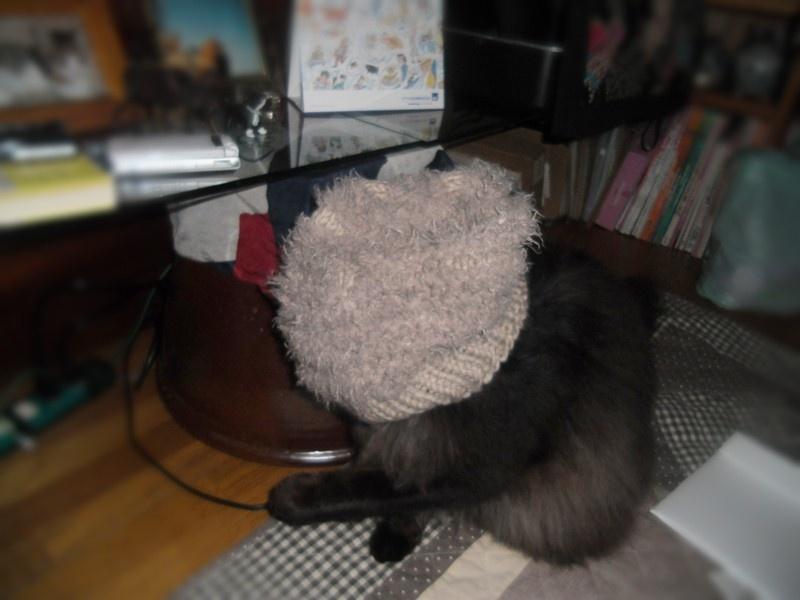 ちゅらにかぶせた帽子