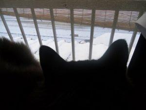 ちゅらの頭越しの雪景色