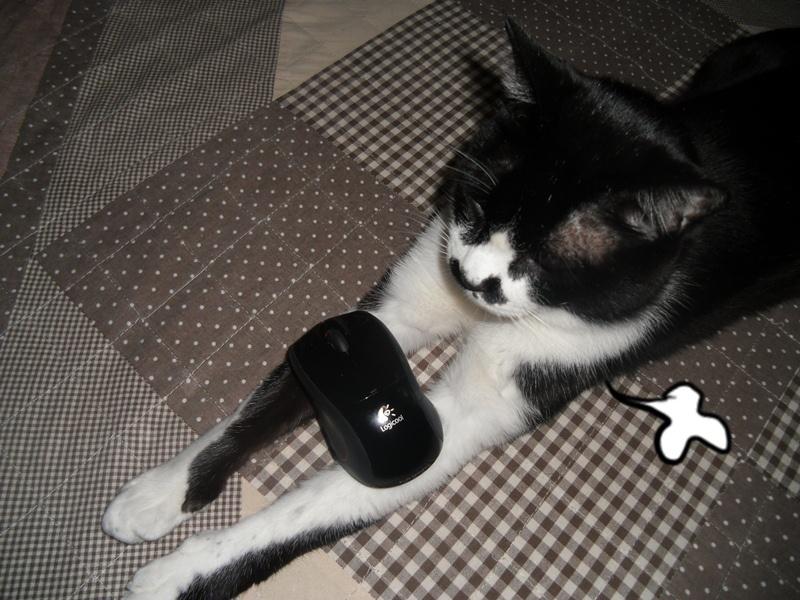 マウスを乗せてみた