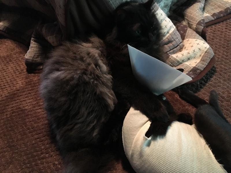 「うらら」の肩に手を回すおっさん猫「ちゅら」