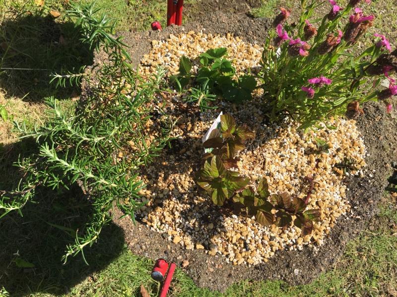 地植えしていたミントに負けがちなハーブを寄せ植え