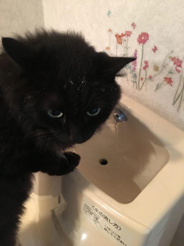 ちゅらの水分補給1