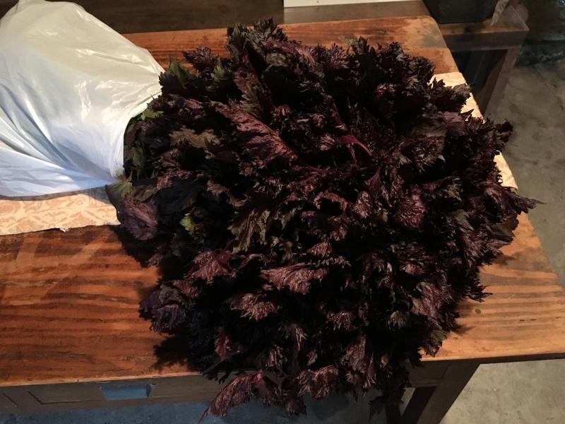 紫蘇の花束