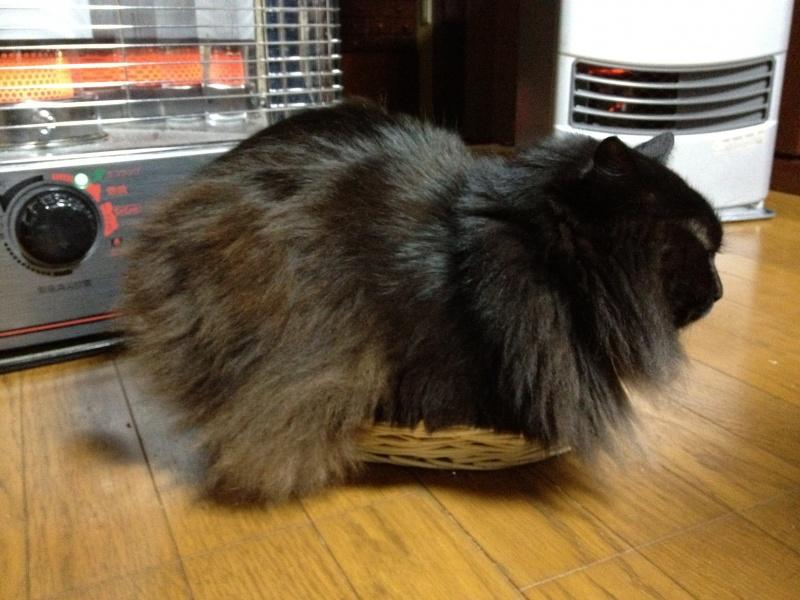 自分よりはるかにちいさい籠に入りたがる猫