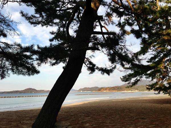 萩の海その6