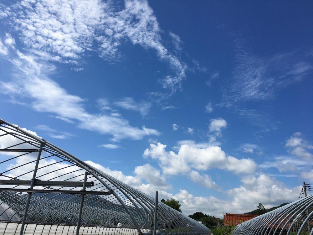 トマト農家のビニールハウスと青空