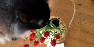 竹細工の花さしとちゅら