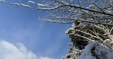 大晦日、一面の雪化粧