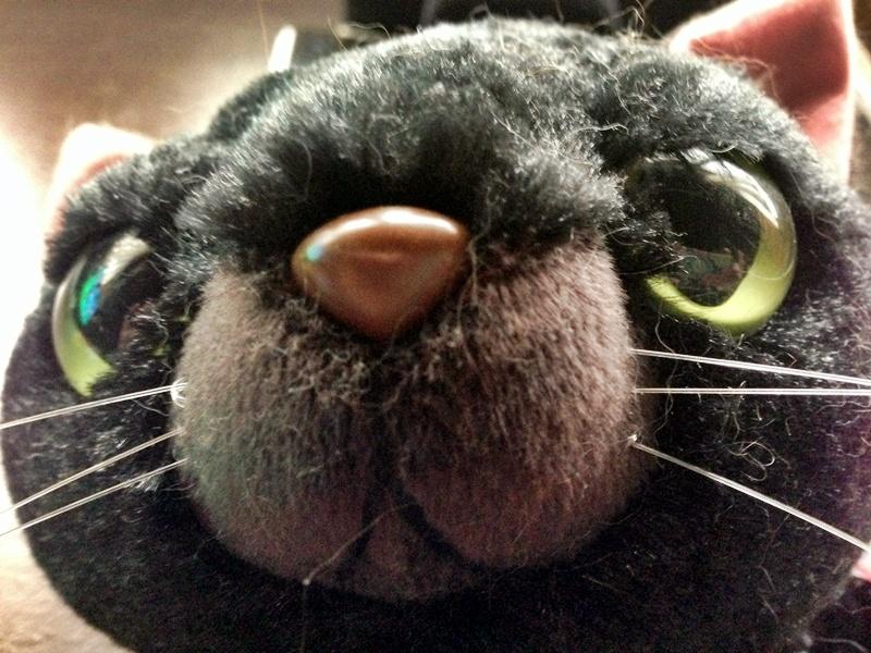 魚眼レンズなしで撮影したワル猫。