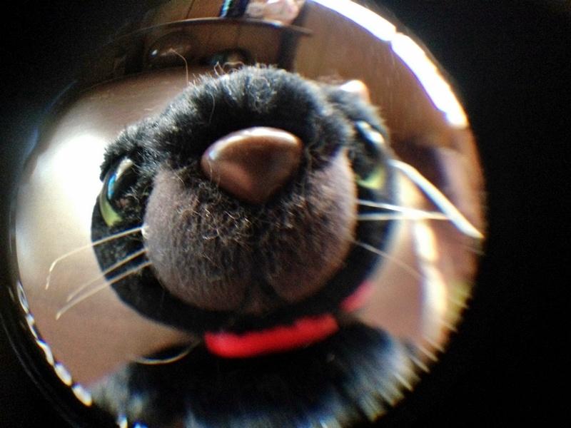 魚眼レンズで撮影したワル猫。