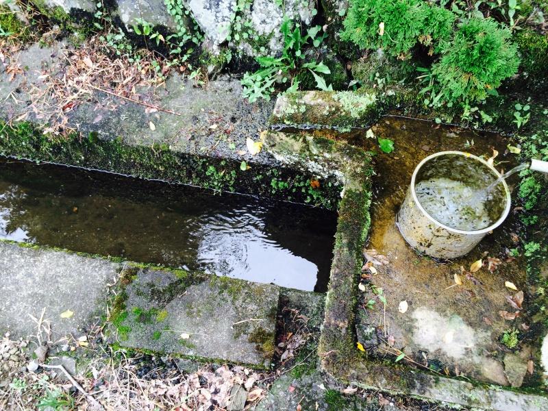 家の裏の水場
