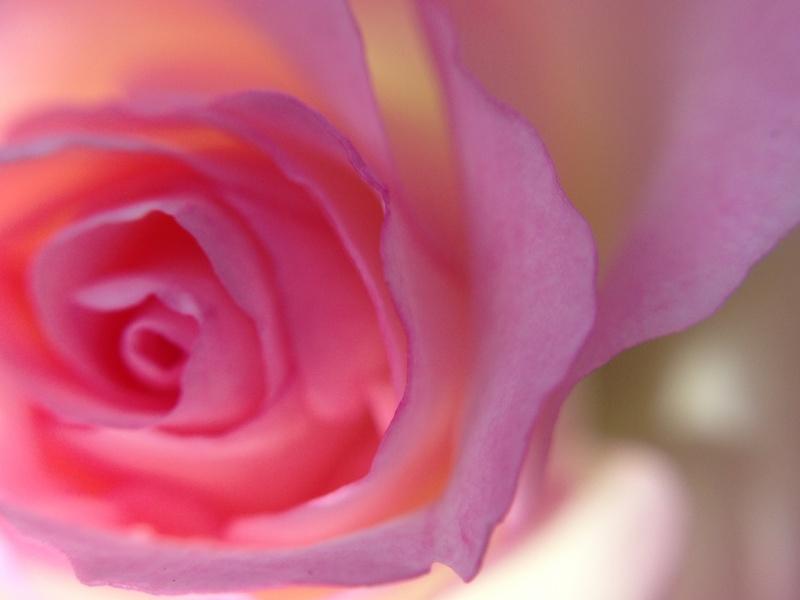 華やぐ~秋の薔薇