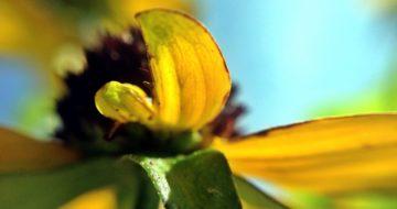 秋の気配~黄色い花と青い空