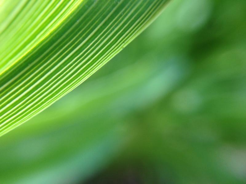 秋の終わりの緑色
