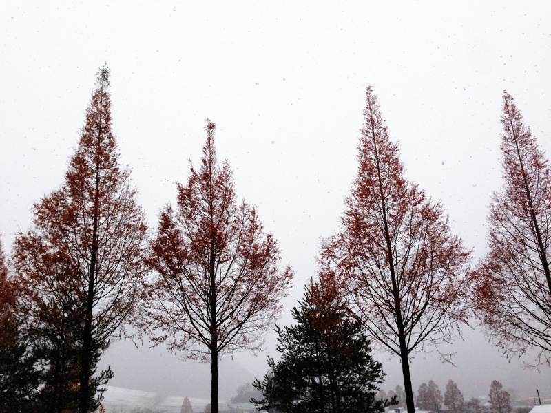 雪の中のクリスマスツリー