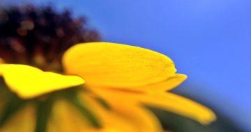 空の青と黄色の花