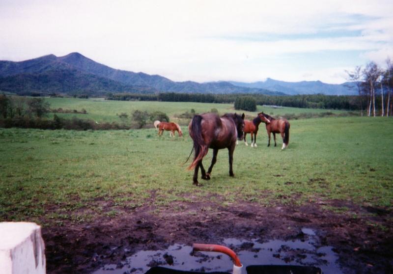 北海道の馬たち